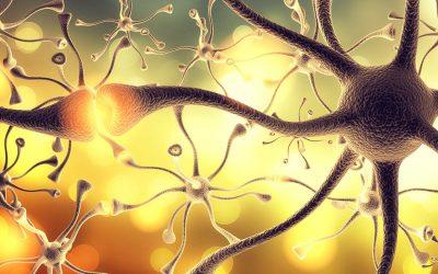Understanding the Adolescent Brain – November 2019